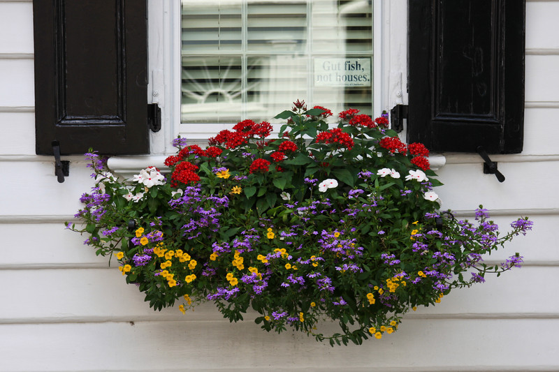 flowers for window boxes in full sun 2
